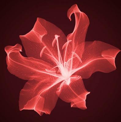 Flowers X-rays (15) 5