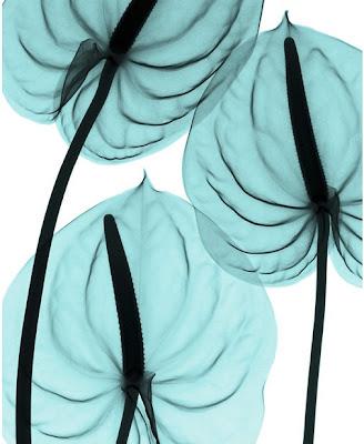Flowers X-rays (15) 2