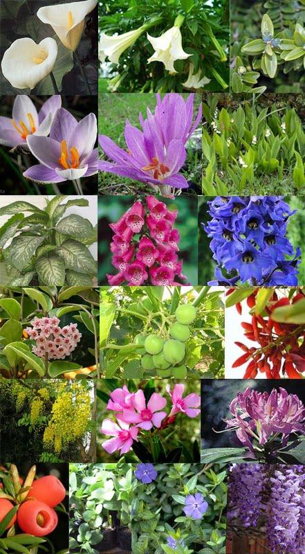 Crianza de periquitos australianos las plantas for Plantas decorativas