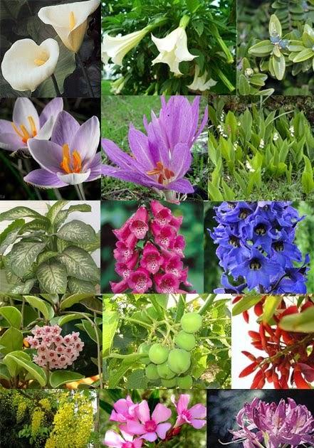 Crianza de periquitos australianos las plantas for Cuales son las plantas decorativas