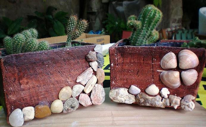 Macetas cactuseras