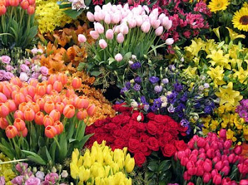 Viva a primavera!