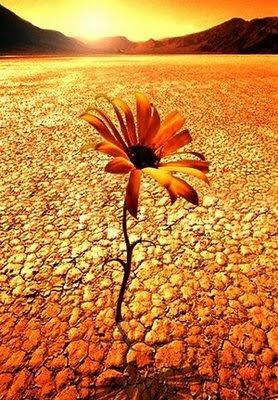 http://1.bp.blogspot.com/_NqbcP9btHDI/SR_YeUZawkI/AAAAAAAAADM/WdM7ARoqDdM/s400/flor+en+el+desierto.jpg