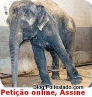 Petição online, circo legal, sem animal