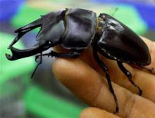 BEETLES FOUND STUFFED WITH COCAINE