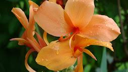 ดอกไม้กับสายลม