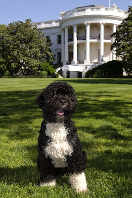 Bo Obama, the First Puppy of USA