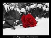 Gracias Rosa Roja