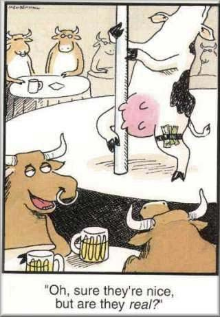 cow-cartoon.jpg