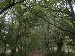 Een sprookjesachtig pad