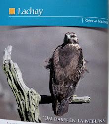 Reserva Nacional Lomas de Lachay. National Reserve Lomas de Lachay