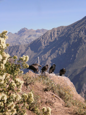 Can del Colca