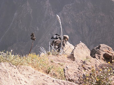 El Colca