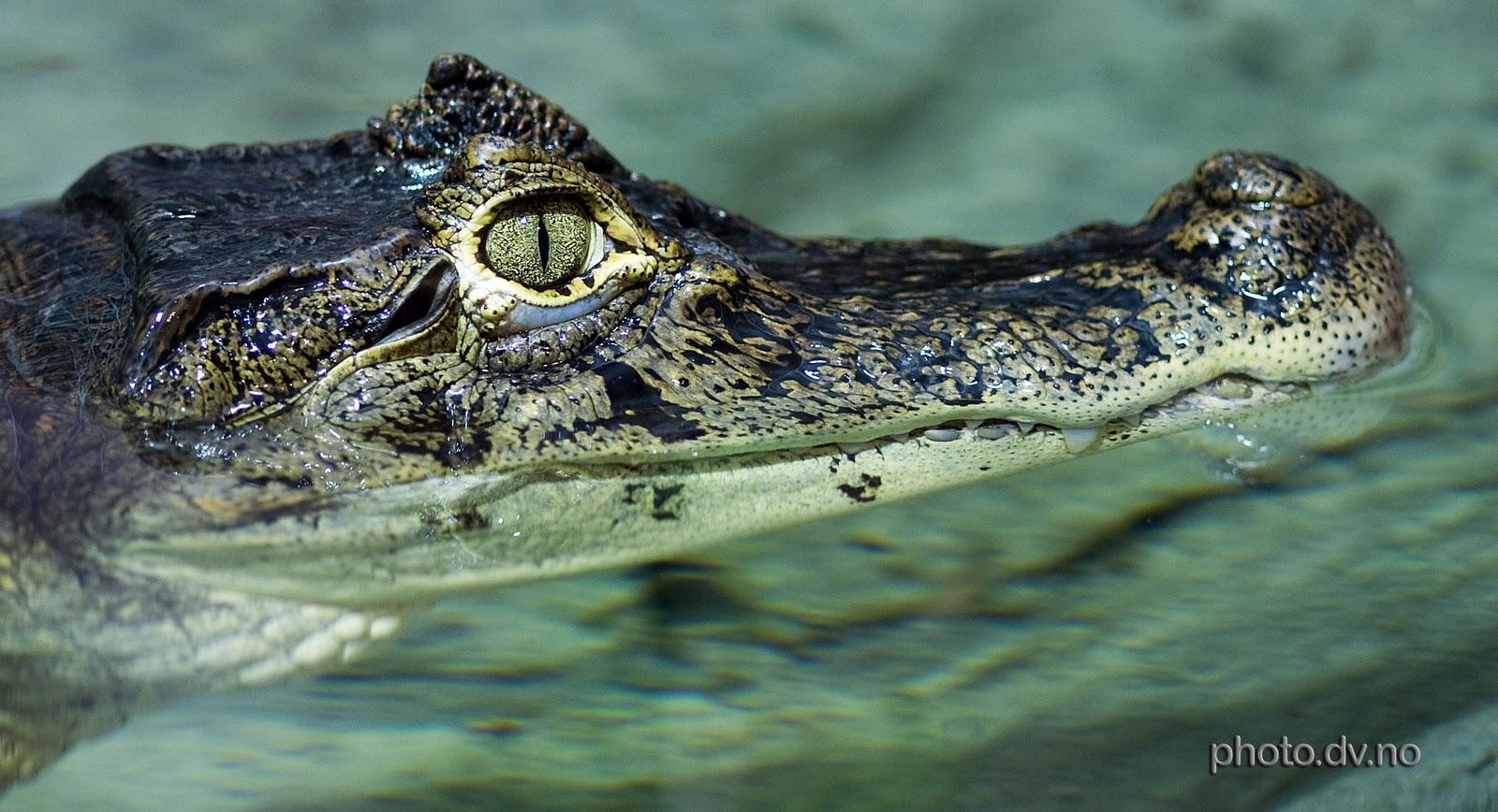 H D Reptiles Break comcs: Reptiles ...