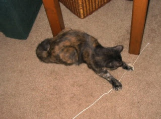 Catzee loves to play with her string.