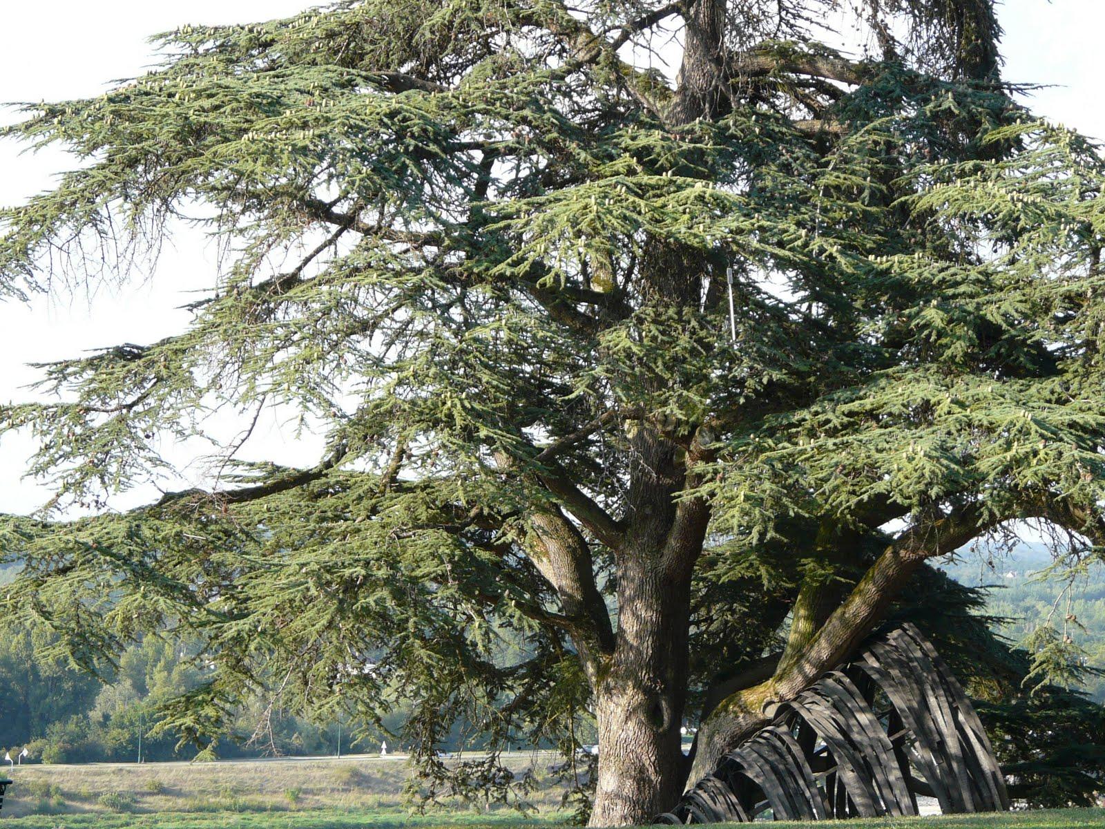 Le jardin du castor les arbres de chaumont for Les arbres du jardin