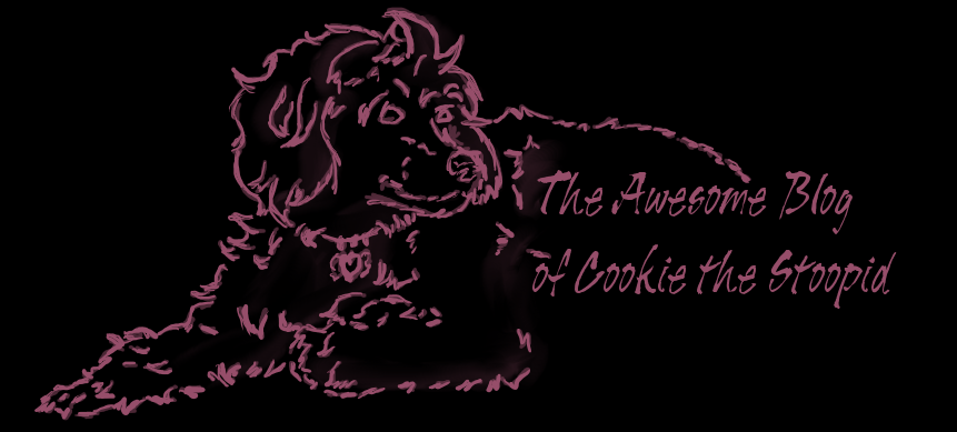 The Awesome Blog of Cookie the Stoopid