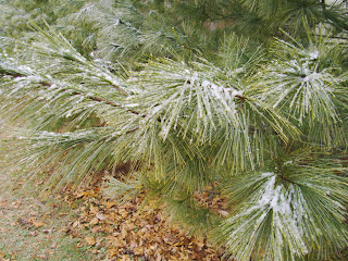 snow on evergreen tree