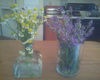 fresh picked chamomile and lavender flowers