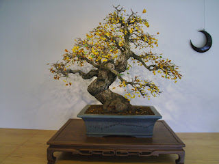 bonsai with crescent wall hanging