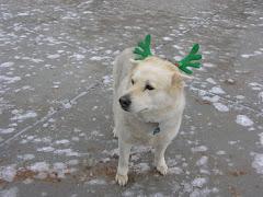 Snow Pig at Christmas