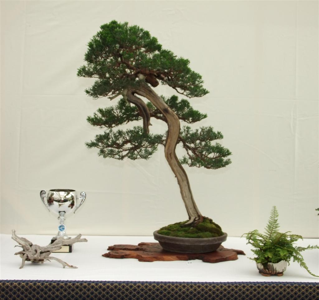 Wirral Bonsai Society Wirral Bonsai Show 2010 Award Winners