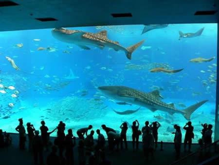 Churaumi Aquarium, Okinawa-Jepang