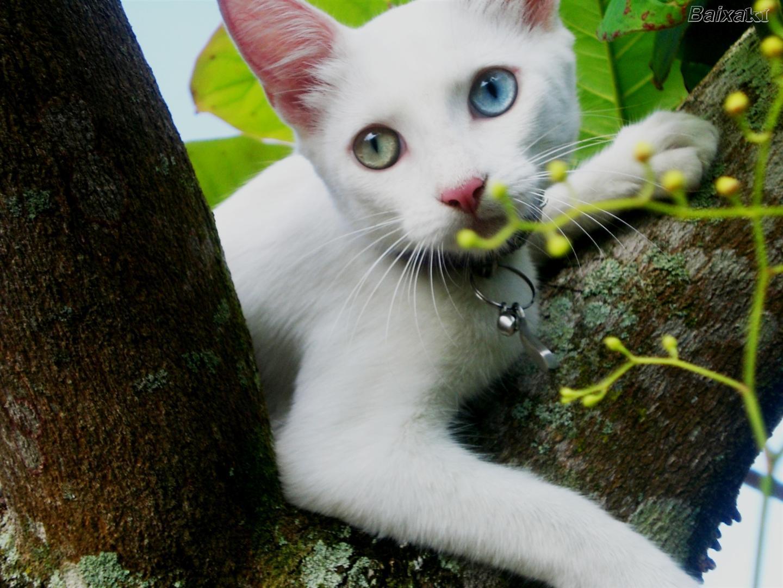 que você irá querer se transformar num gato só para curtir a casa #93B514 1440 1080
