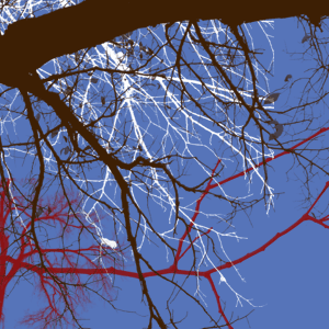 [DESCARGA] Varios brushes para Photoshop Tree_borders_iii