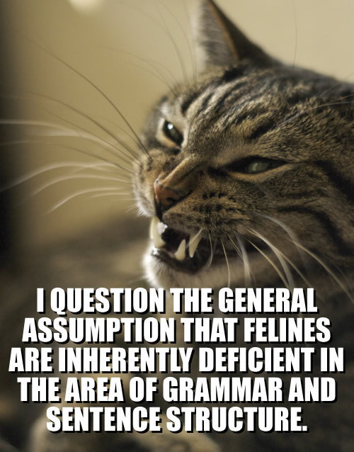 Lolcat Lolcatz Lowlcaz cool,lolcat-i-question-the-general-assumption-that-feli1