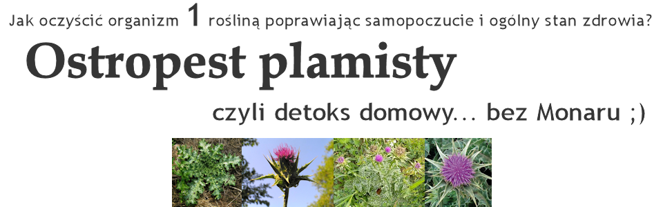 Ostropest plamisty / Jak naturalnie oczyścić organizm? Oczyszczanie, odtruwanie, detoksykacja...