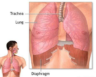 Health Care Tips, Health Tips, Diaphragmatic Breathing Exercises