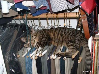 Сладко спится в шкафу на вешалках