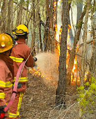 Global Warming increasing US wildfires.