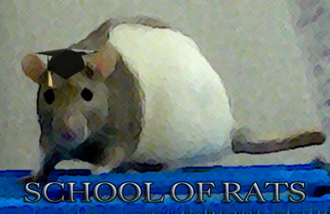 School of Rats Malaysia