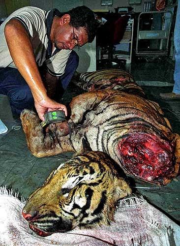 Animales muertos por la contaminacin Qu son los animales