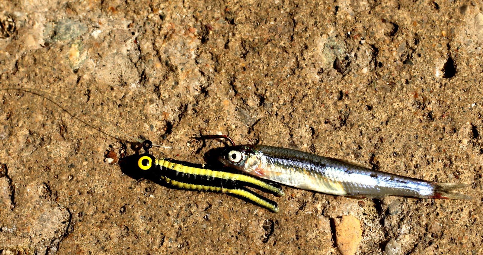 Exeter lane diaries crappie minnows for Crappie fishing with minnows