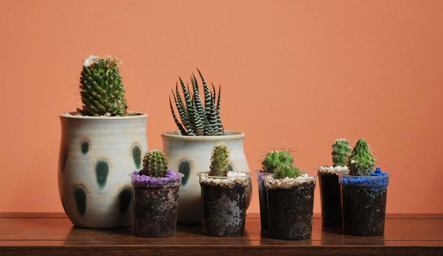 Qimmo - Cactus en macetas pequenas ...