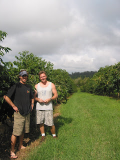 sean and farmer gary with rows and rows of 100  kona coffee trees