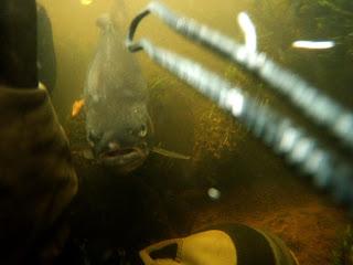 Flugfiske Baltak 11 08 09
