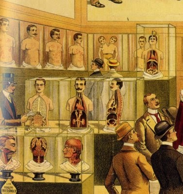 westminster wisdom anatomy museums. Black Bedroom Furniture Sets. Home Design Ideas