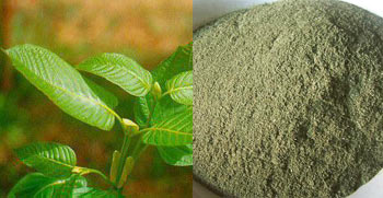 Indonesia Vs Thai Kratom Kranzburg