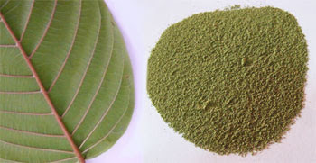 Check our Kratom Wholesale Prices