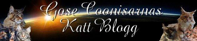 Gose Coonisarna Katt Blogg