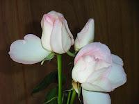 正月飾りのバラのアップ