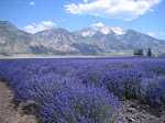 Lavender Days 2005
