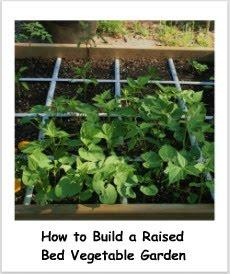 My New 30 Raised Bed Vegetable Garden Update On Fertilizing
