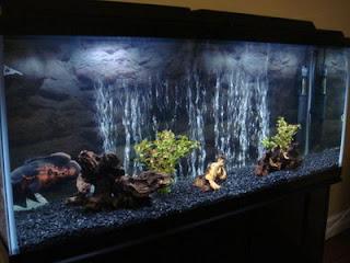 Frogstone flowerhorn king origin of flowerhorn oscar for Star wars fish tank decor