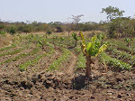 Malawi 2002 - Food