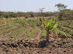 Malawi 2002 - Food